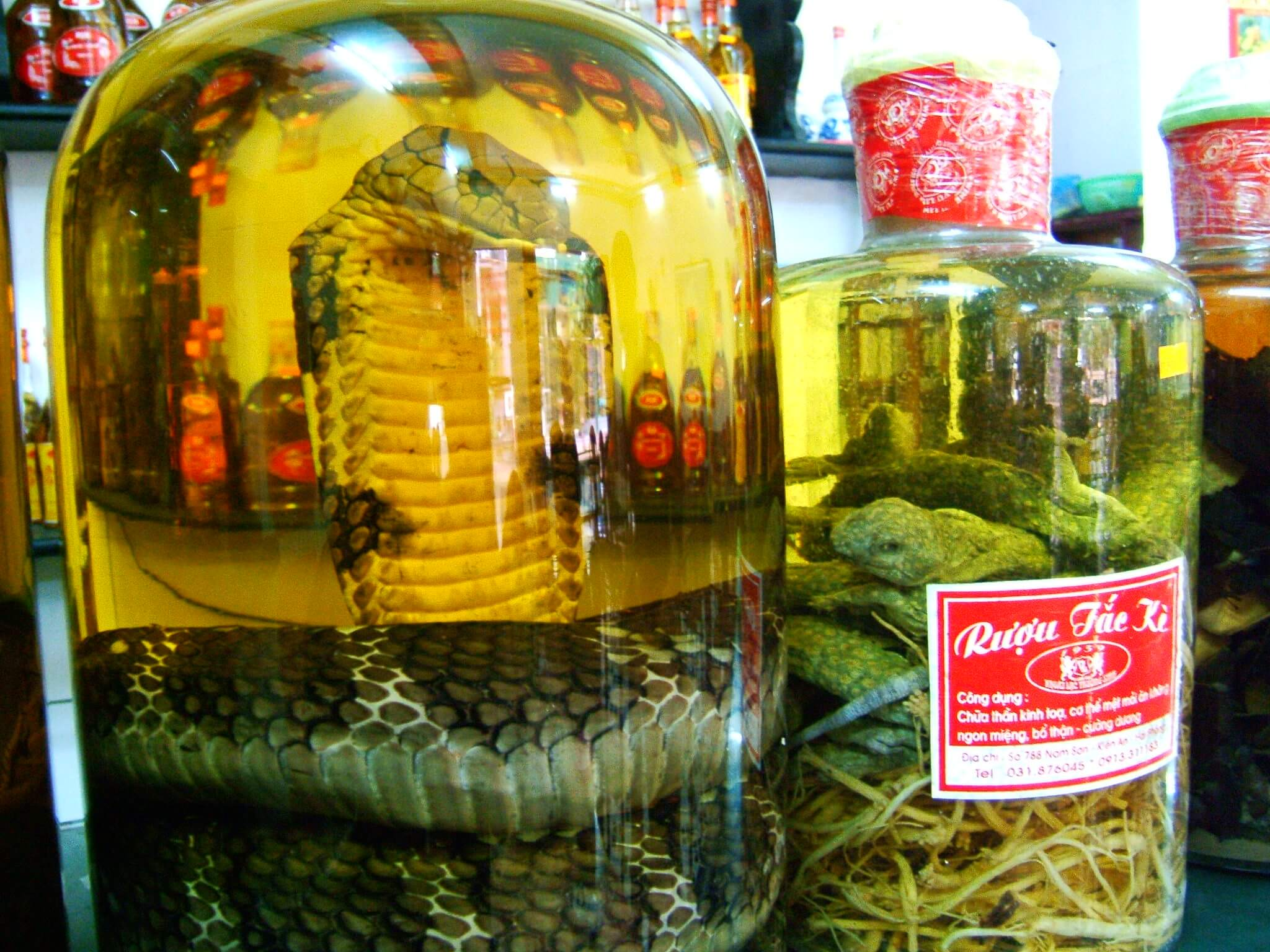 Sip on snake wine in Vietnam